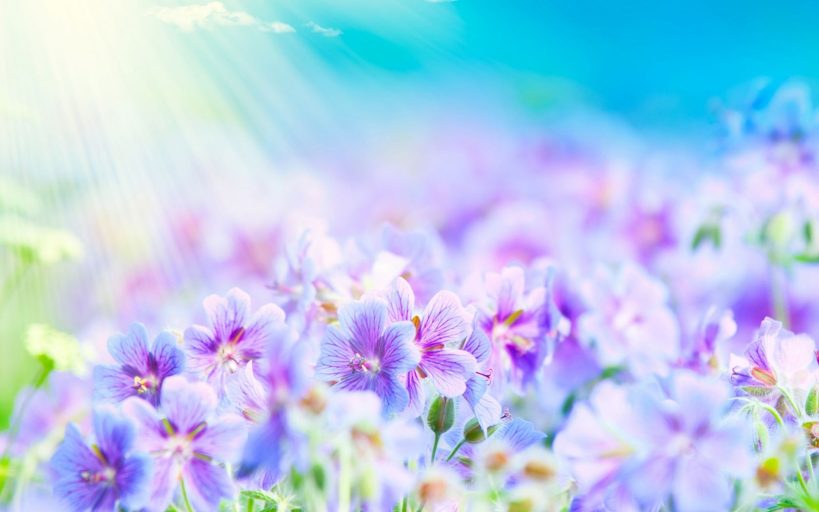 Beautiful Summer Flowers Wallpaper High Resolution Is Cool Wallpapers