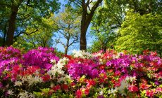 Beautiful Summer Flowers Wallpapers Free Is Cool Wallpapers