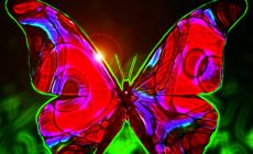 Black And Red Butterfly Wallpaper Full Hd Is Cool Wallpapers