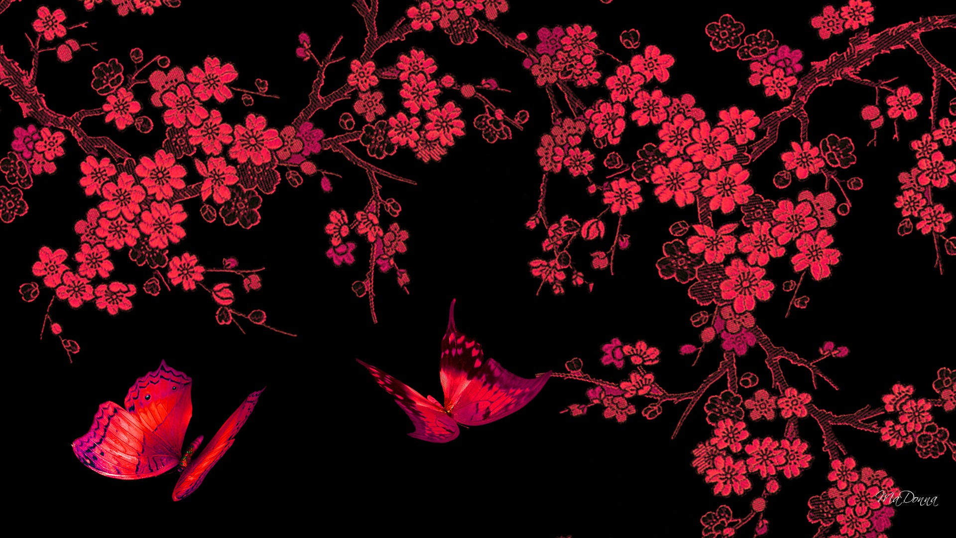 Black And Red Butterfly Wallpaper Hd Resolution Is Cool Wallpapers