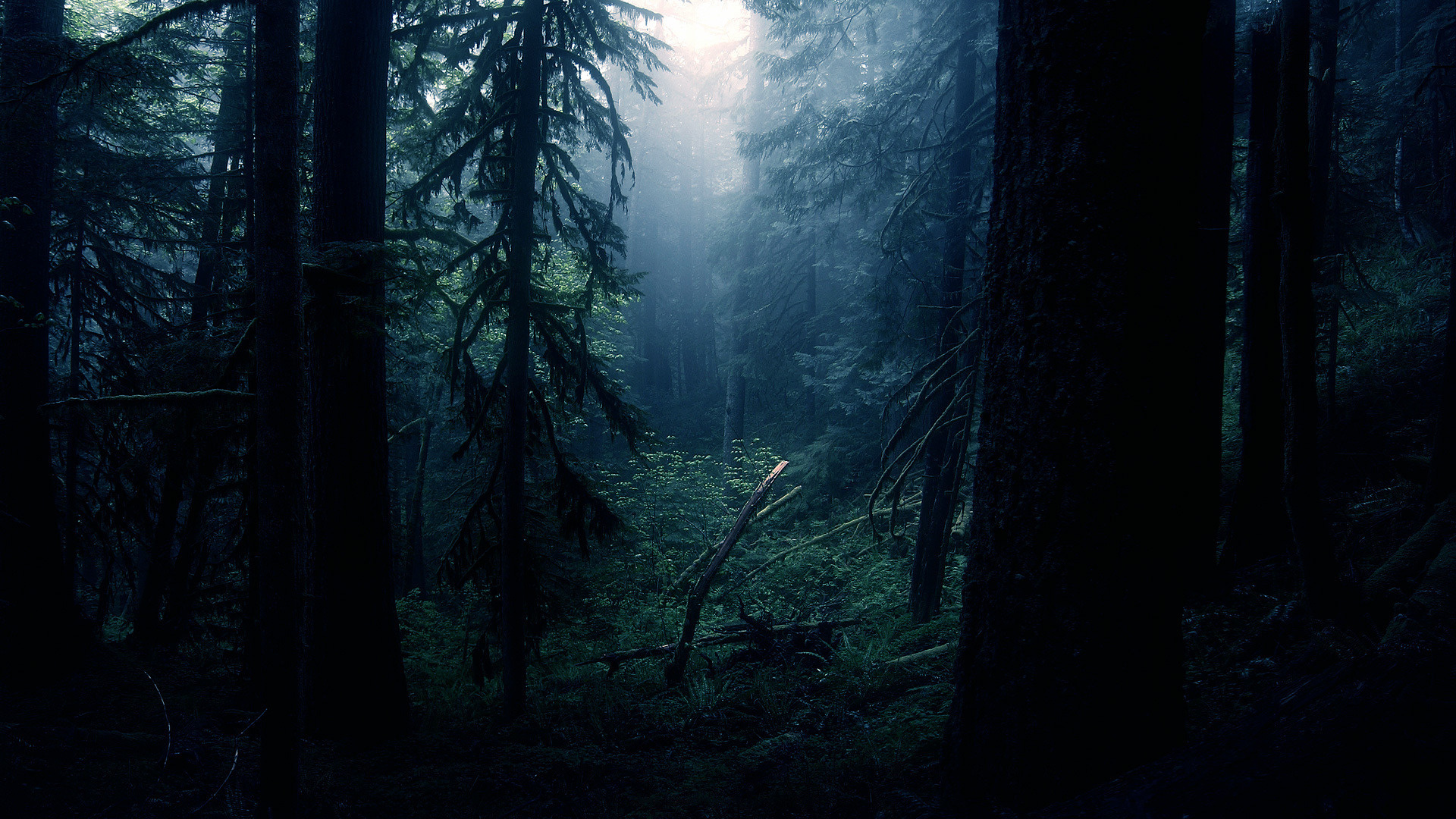 Dark Forest S Wallpaper Full Hd Is Cool Wallpapers