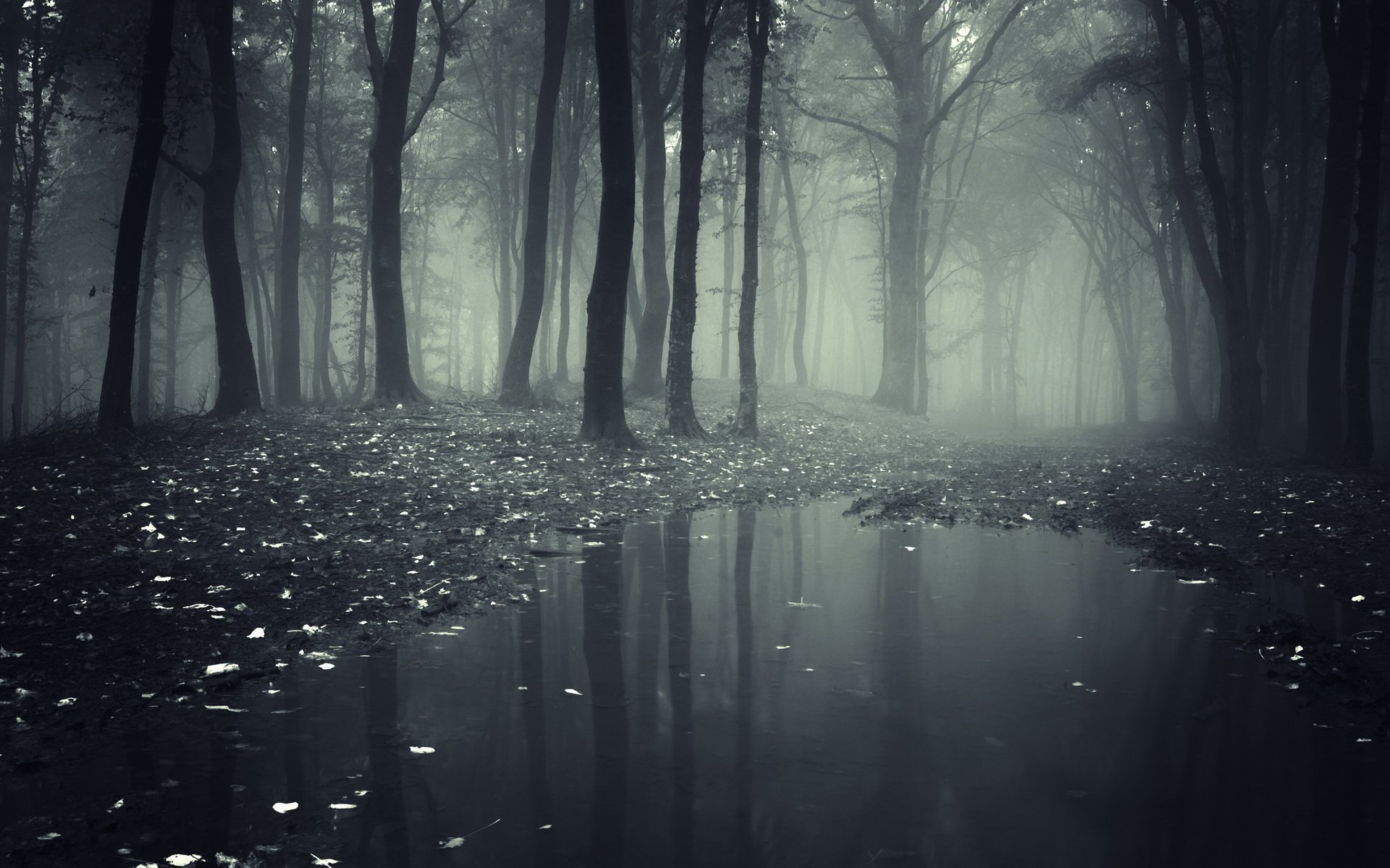 Dark Forest S Wallpaper Hd Resolution Is Cool Wallpapers
