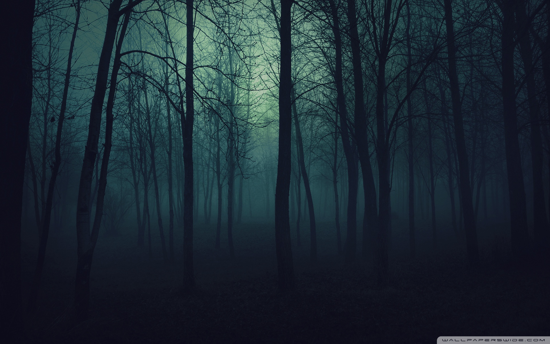 Dark Forest S Wallpaper Mobile Is Cool Wallpapers