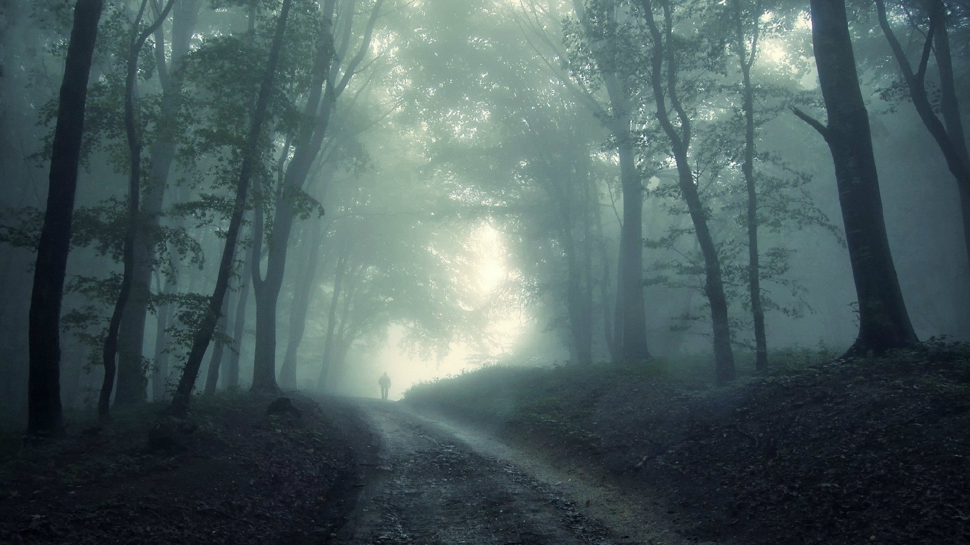Dark Forest S Wallpapers Hd Is Cool Wallpapers