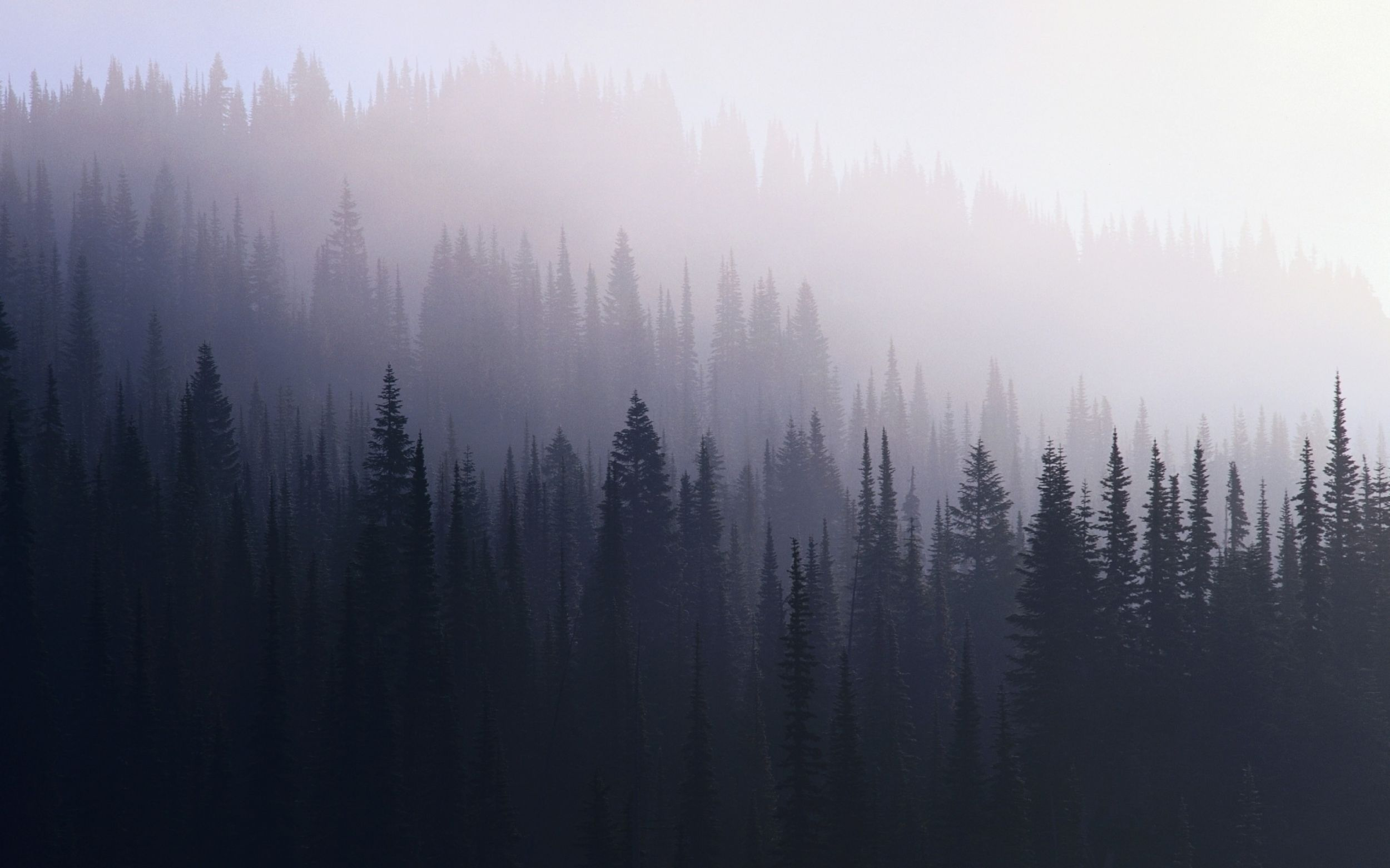 Dark Forest S Wallpapers High Quality Is Cool Wallpapers