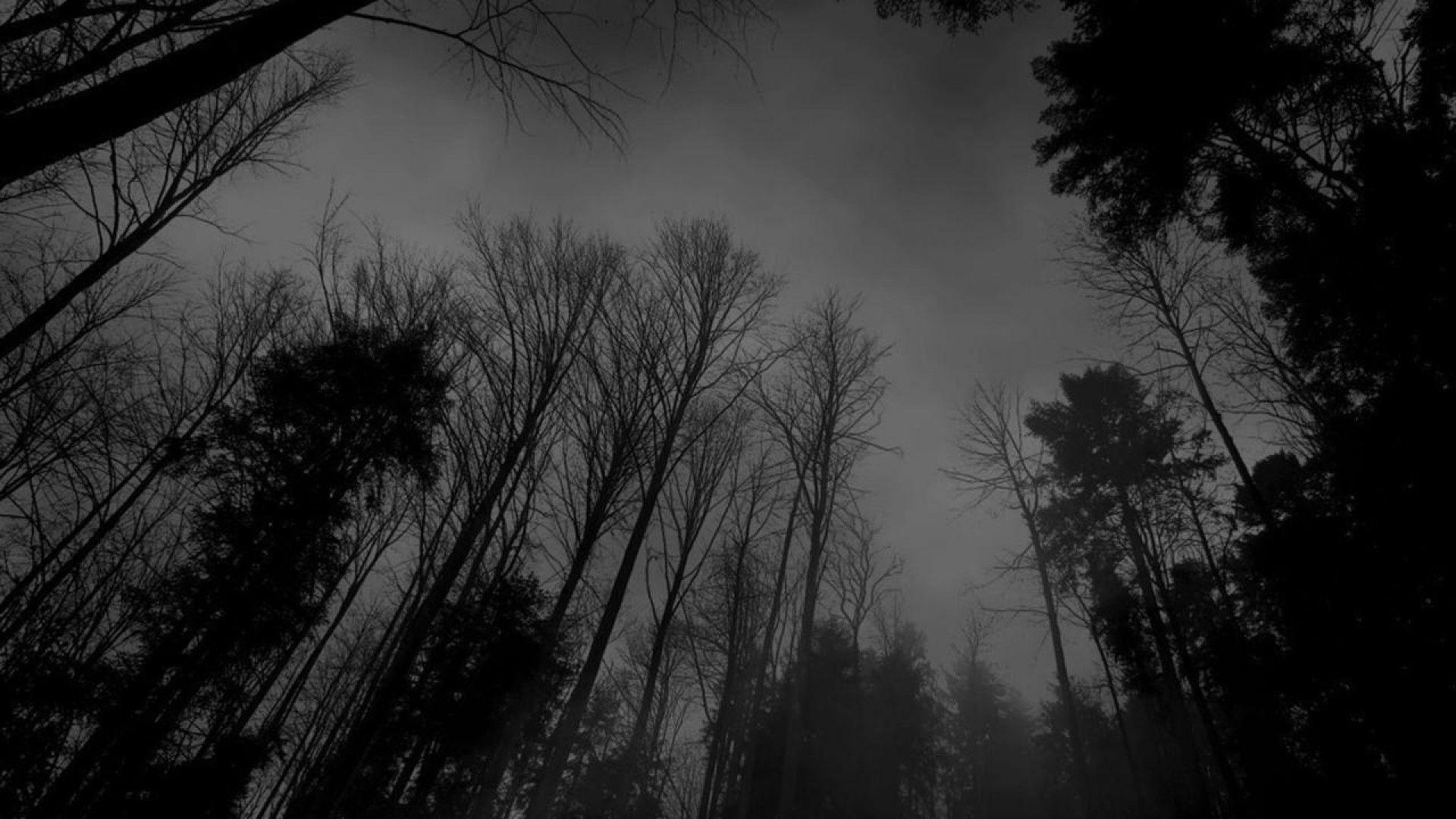 Dark Forest S Wallpapers Picture Is Cool Wallpapers