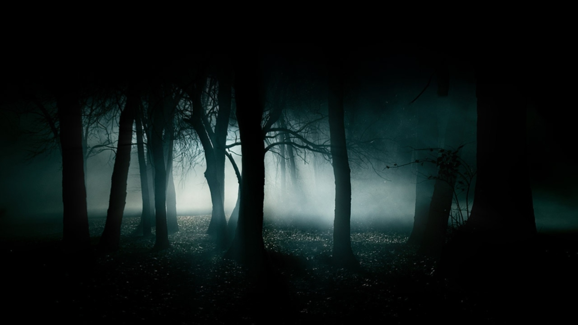 Dark Forest S Wallpapers Widescreen Is Cool Wallpapers