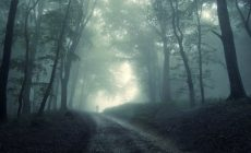 Dark Forest Wallpaper High Quality Is Cool Wallpapers