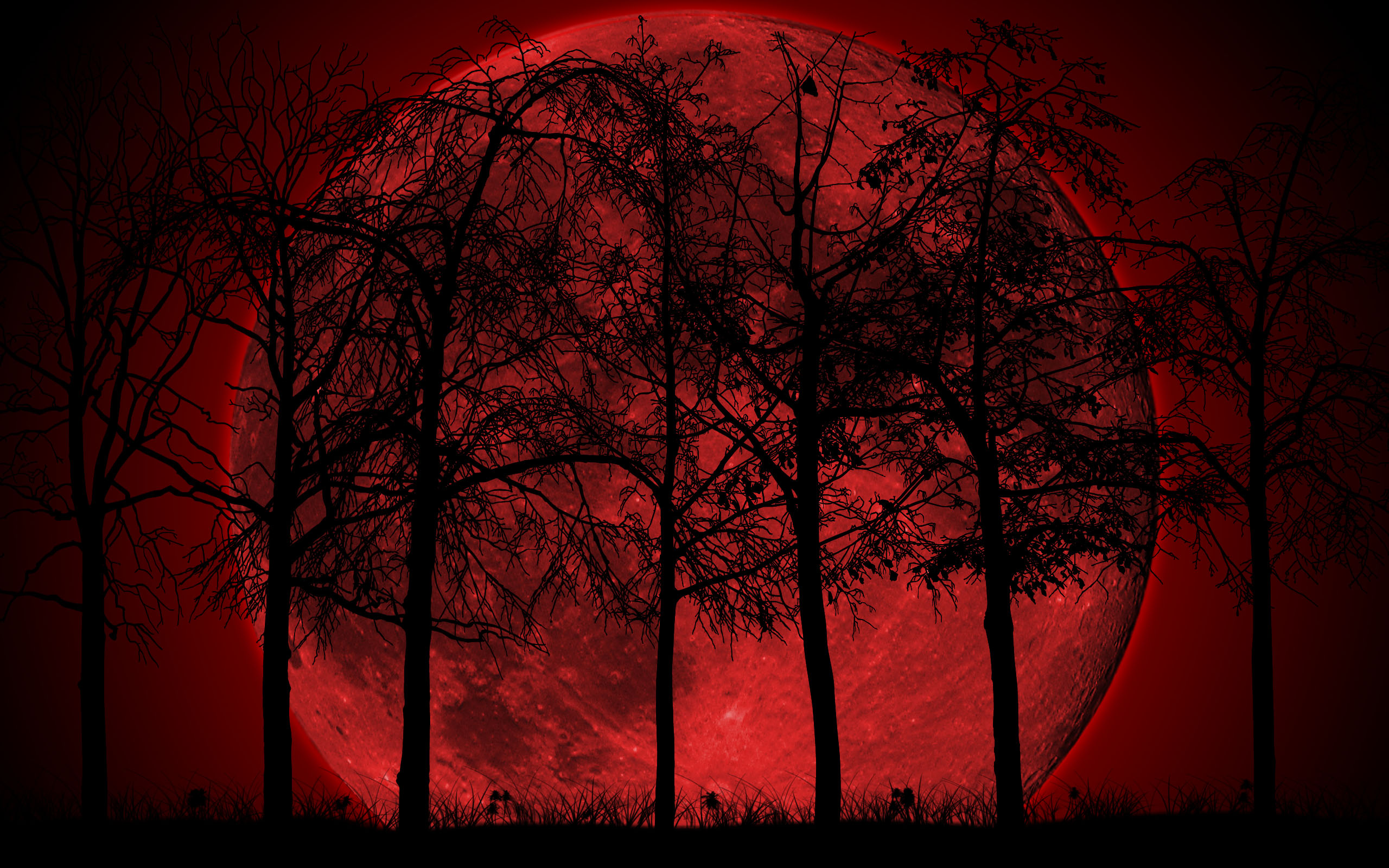 Dark Forest Wallpaper High Quality Resolution Is Cool Wallpapers