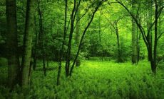 Dark Green Nature Wallpapers High Quality Is Cool Wallpapers