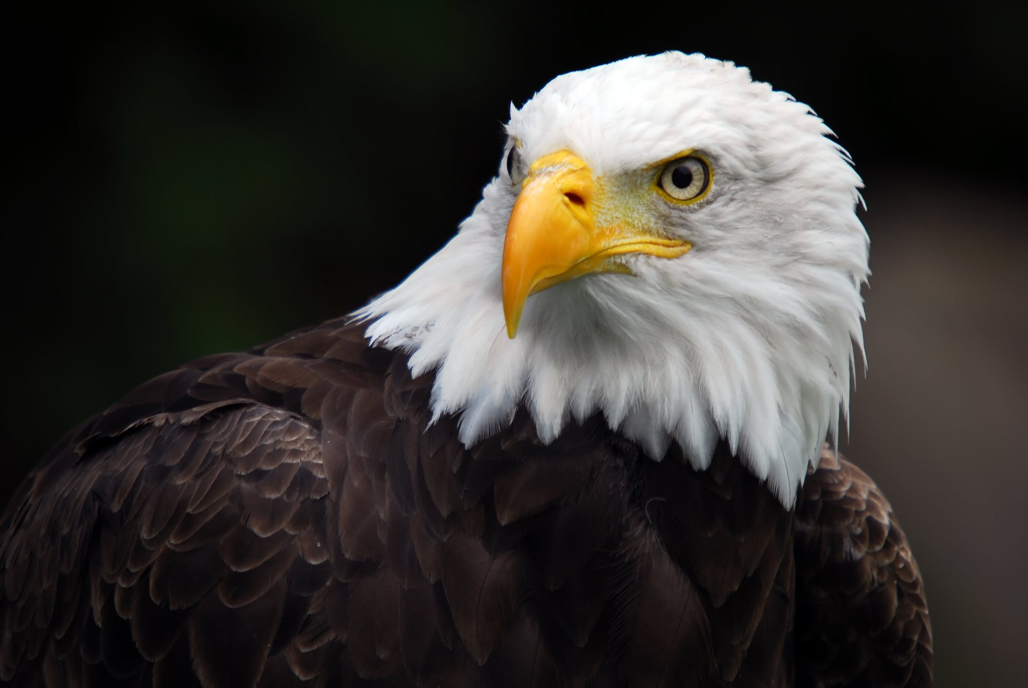Eagle Wallpaper High Quality Is Cool Wallpapers