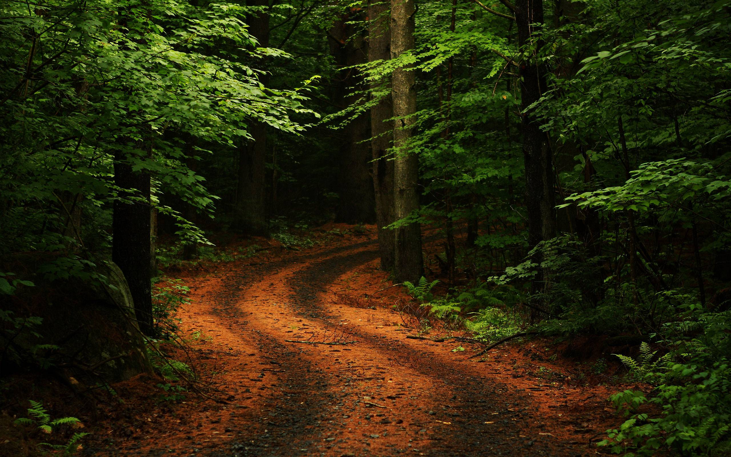 Forest Wallpaper High Definition Is Cool Wallpapers