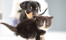 Kitten And Puppy Playing Wallpapers High Quality Resolution Is Cool Wallpapers