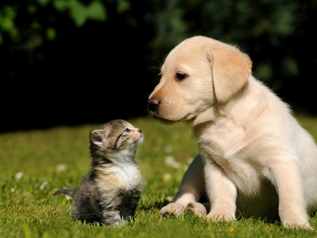 Kitten And Puppy Wallpapers Background Is Cool Wallpapers