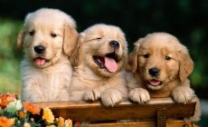 Kitten And Puppy Wallpapers Free Is Cool Wallpapers