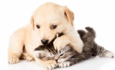 Kitten And Puppy Wallpapers Hd Resolution Is Cool Wallpapers