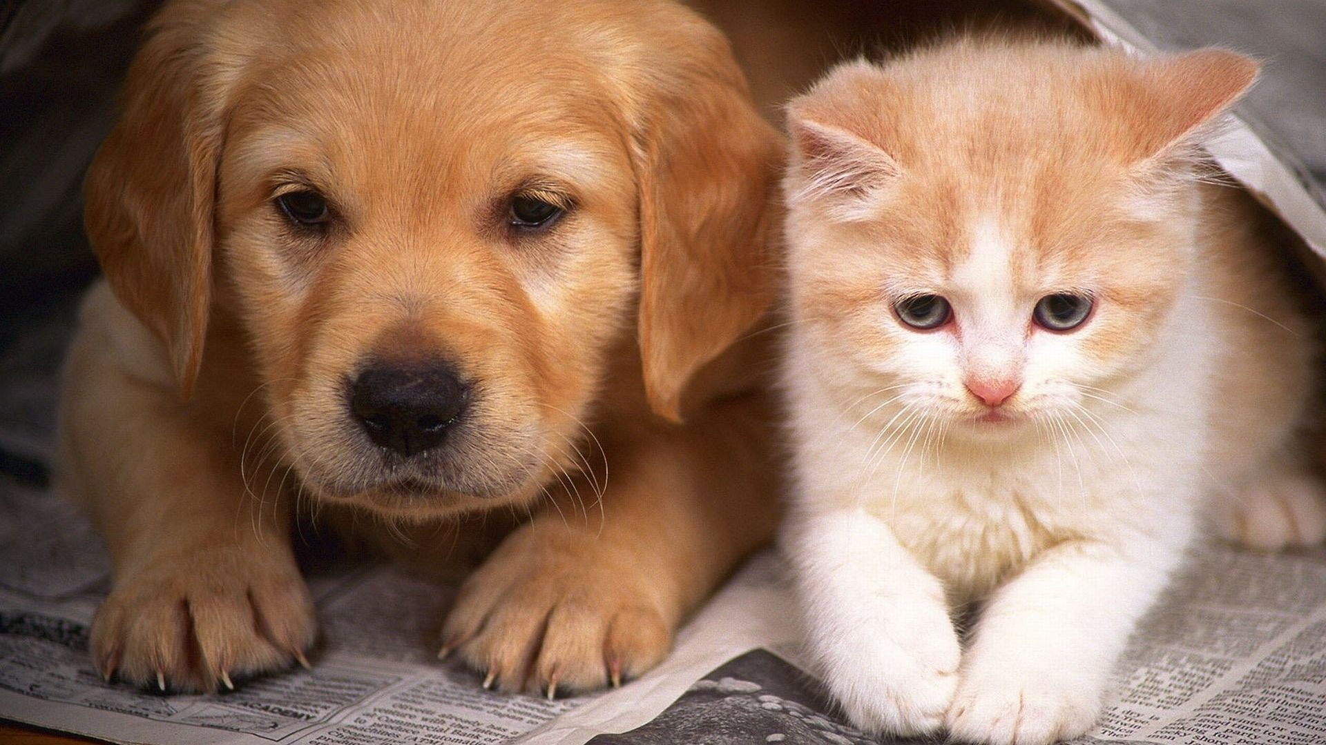 Kitten And Puppy Wallpapers High Definition Is Cool Wallpapers