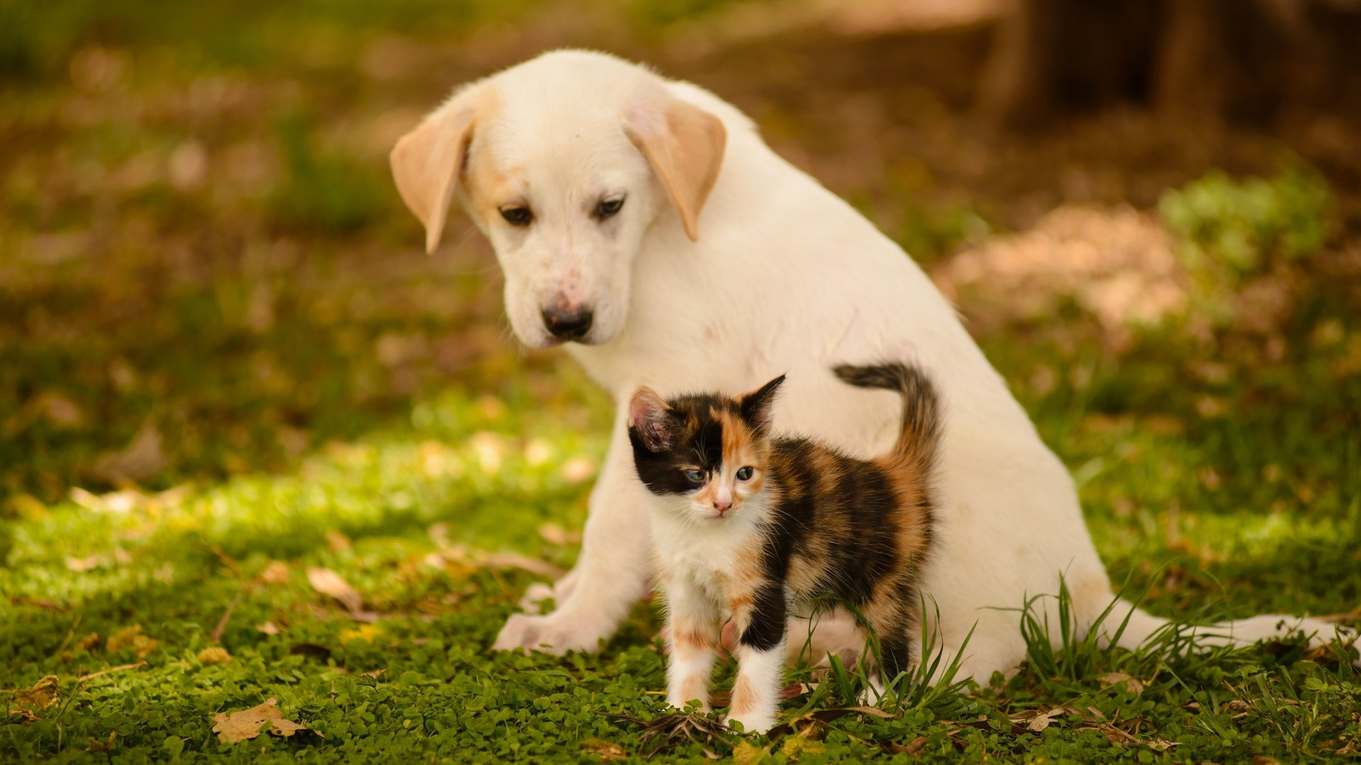 Kitten And Puppy Wallpapers Mobile Is Cool Wallpapers