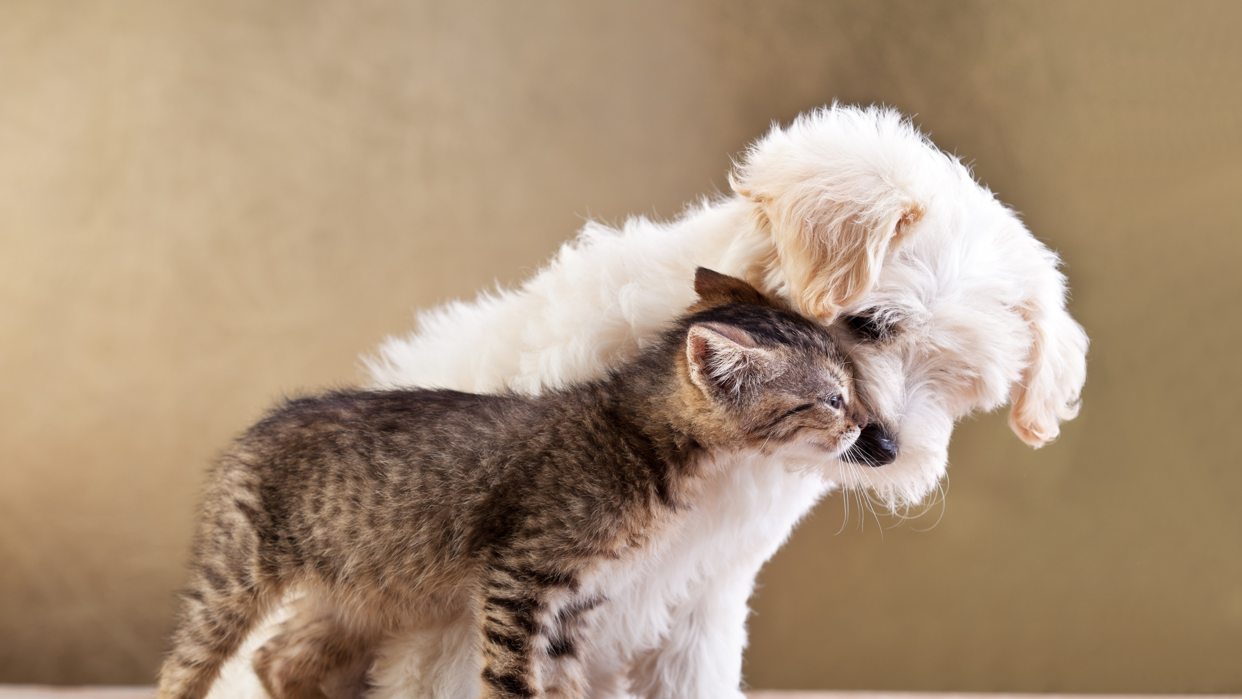 Kitten And Puppy Wallpapers Picture Is Cool Wallpapers