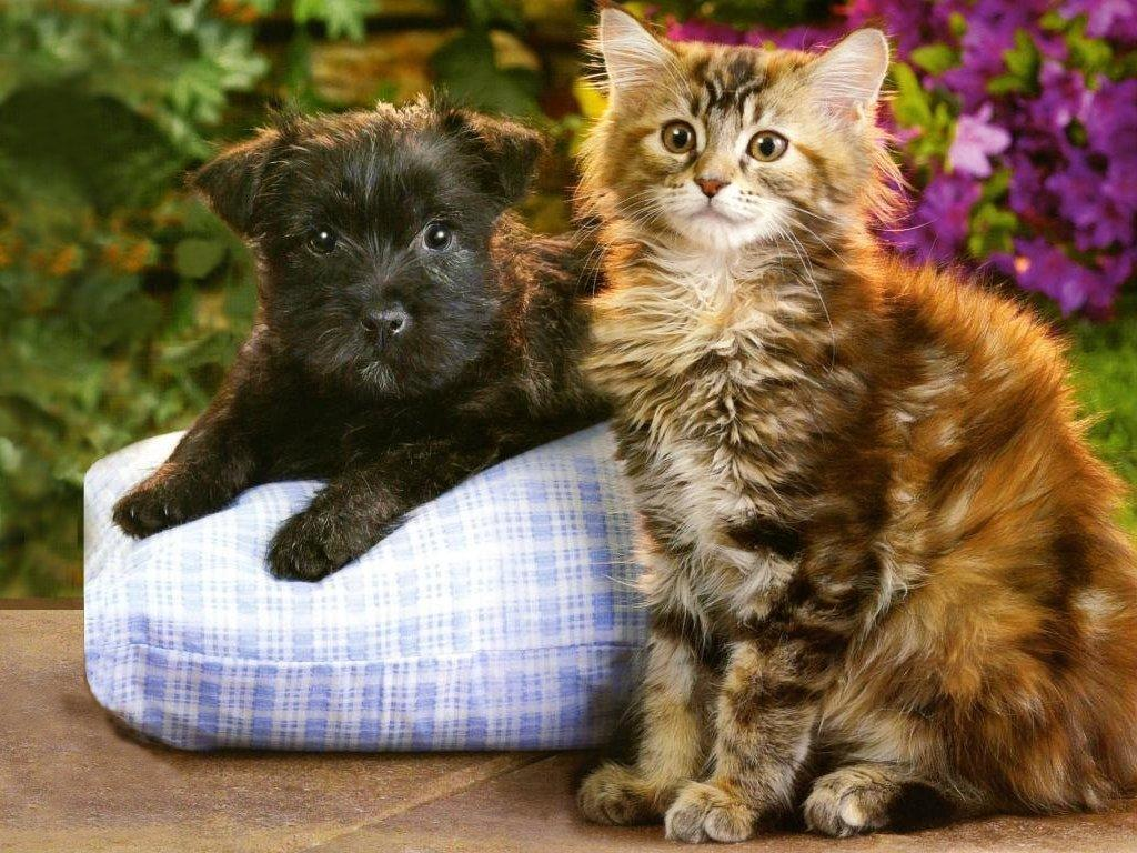Kitten And Puppy Wallpapers Widescreen Is Cool Wallpapers