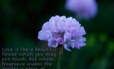 Nice Nature S With Quotes Wallpaper Background Is Cool Wallpapers
