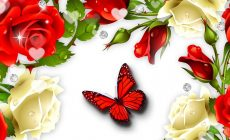 Red Butterfly Wallpapers High Definition Is Cool Wallpapers