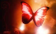 Red Butterfly Wallpapers Widescreen Is Cool Wallpapers
