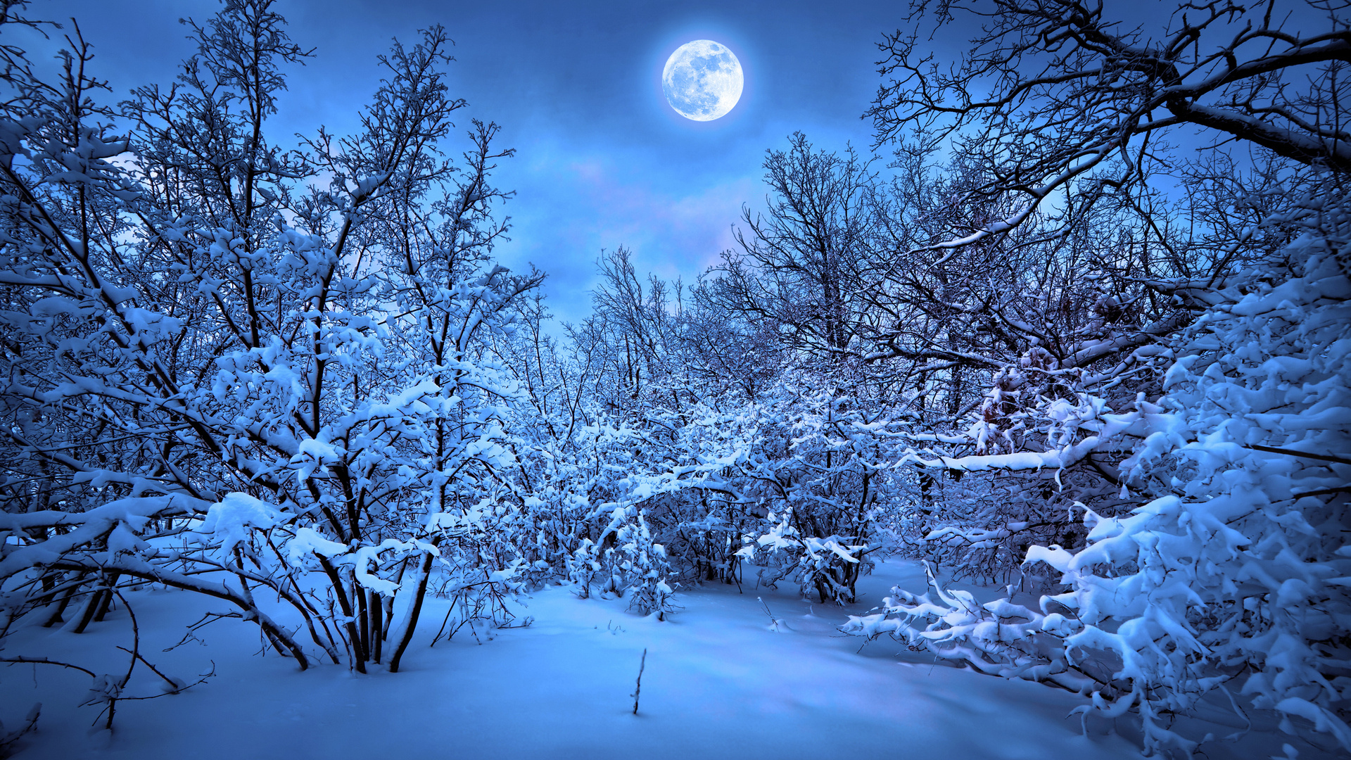 Snow Night Wallpaper Photo Is Cool Wallpapers