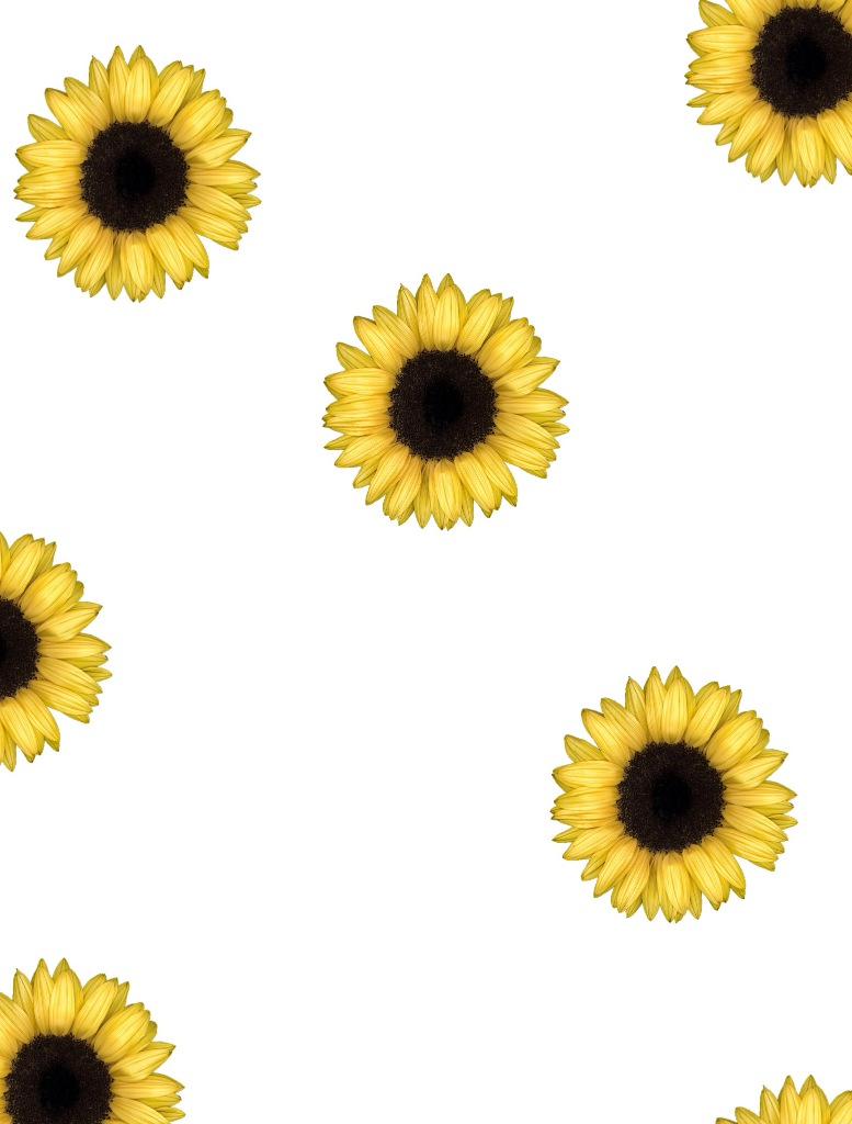 Sunflower Pictures Tumblr - 4k Wallpapers
