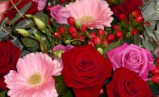 Supreme Floral Wallpapers Hd Is Cool Wallpapers