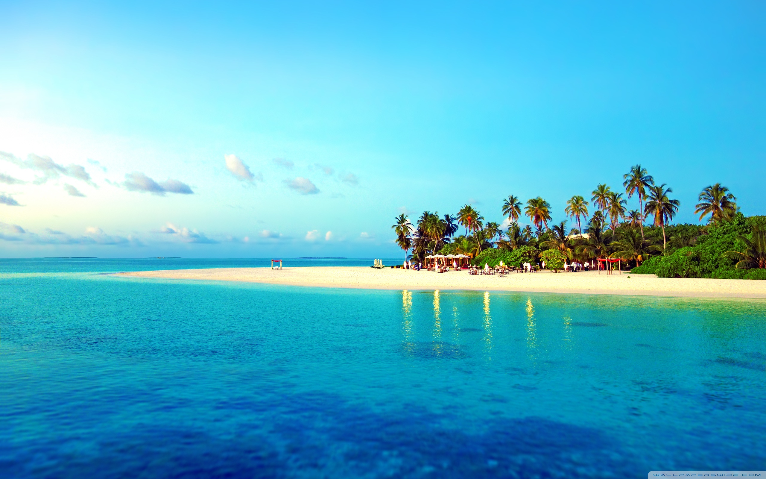 Tropical Beaches With Palm Trees S Backgrounds Is Cool Wallpapers