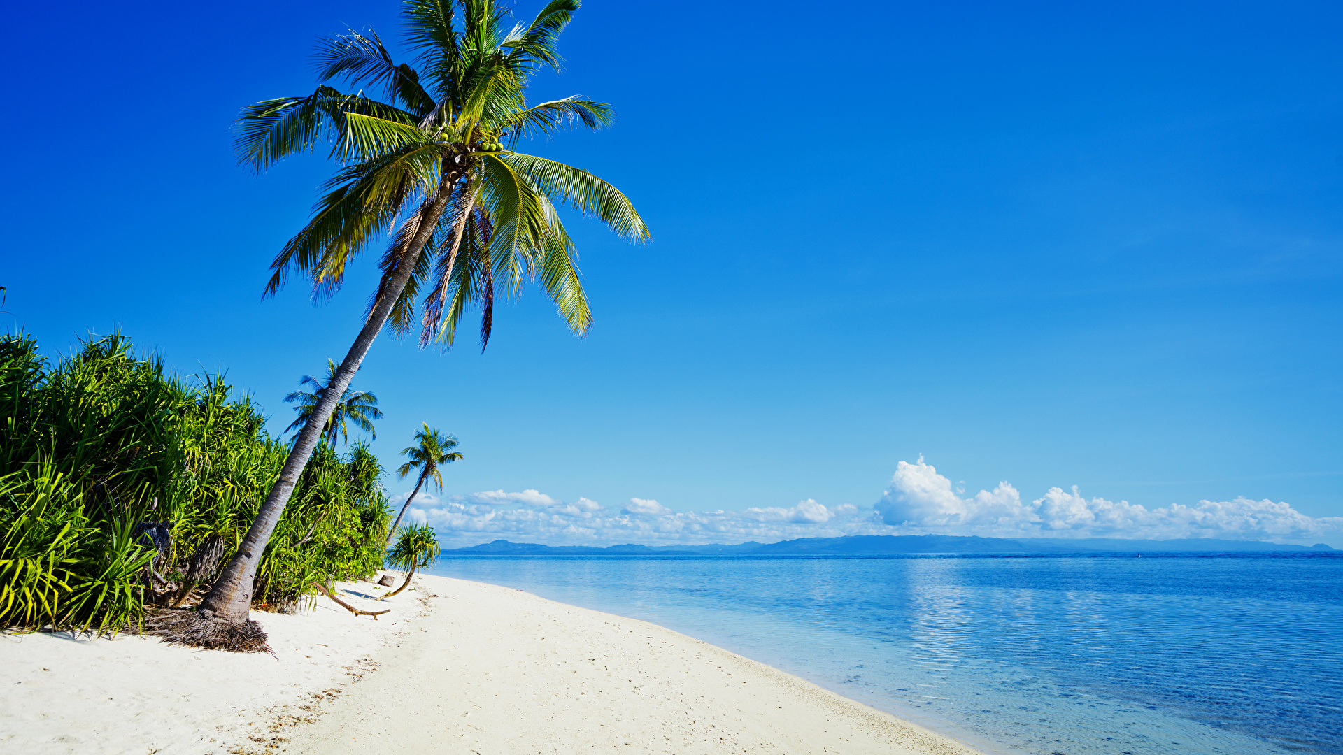 Tropical Beaches With Palm Trees S Wallpaper Desktop Background Is Cool Wallpapers