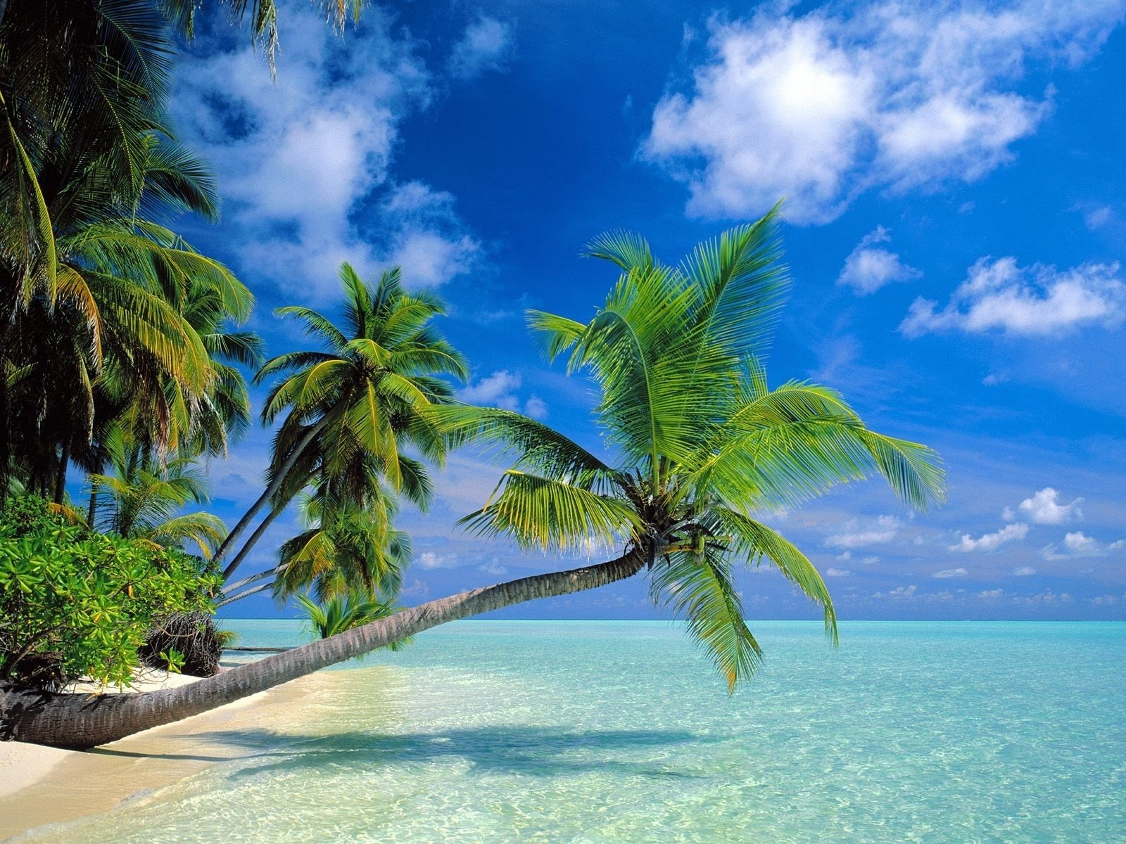 Tropical Beaches With Palm Trees S Wallpaper Free Is Cool Wallpapers