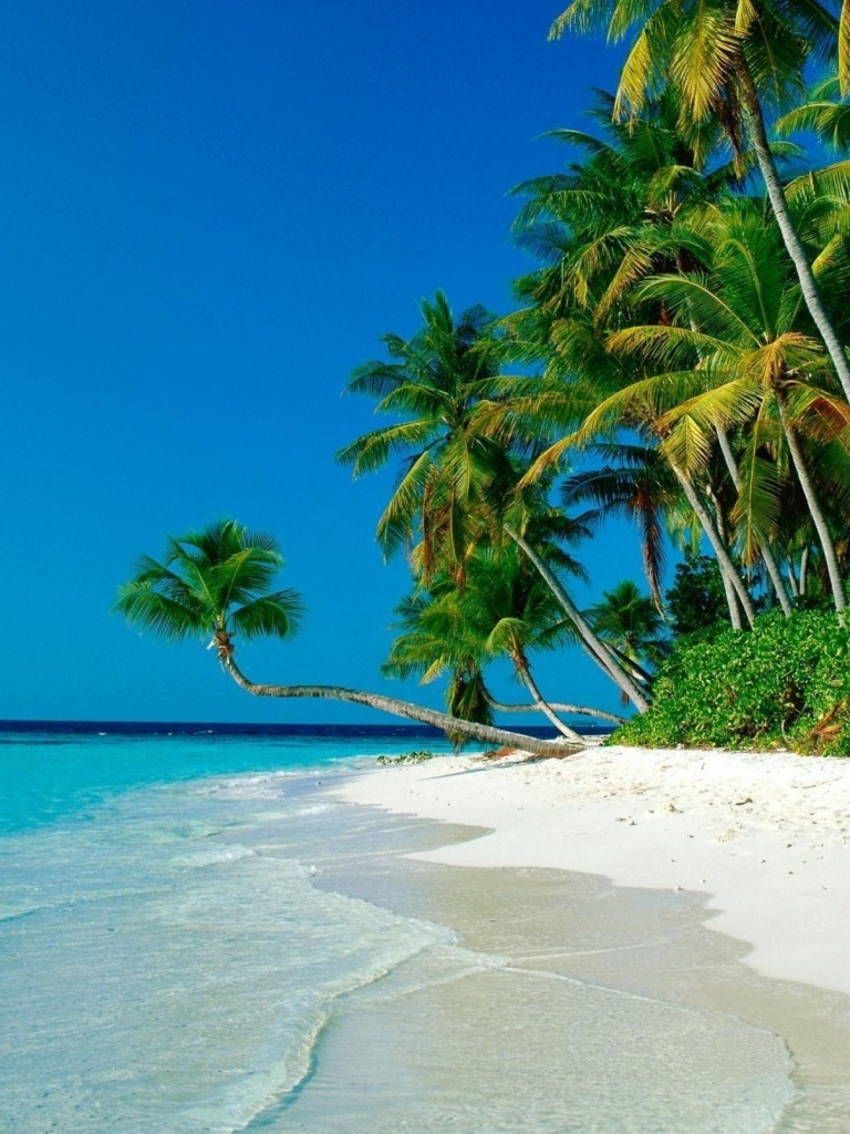 Tropical Beaches With Palm Trees S Wallpaper High Resolution Is Cool Wallpapers