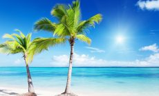 Tropical Beaches With Palm Trees S Wallpaper Picture Is Cool Wallpapers