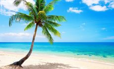 Tropical Beaches With Palm Trees S Wallpapers Photo Is Cool Wallpapers