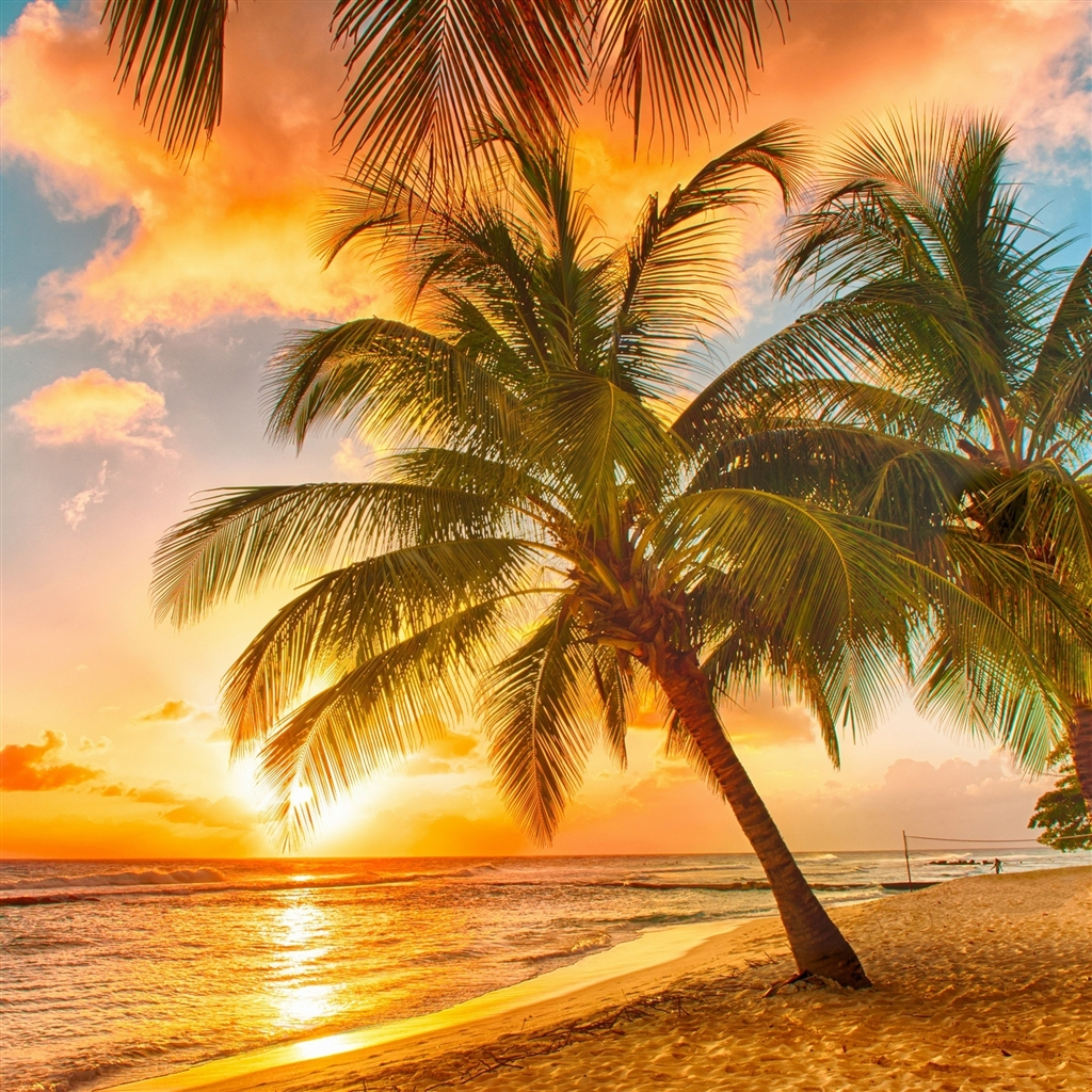 tropical beaches with palm trees s wallpapers wide | nature hd wallpaper