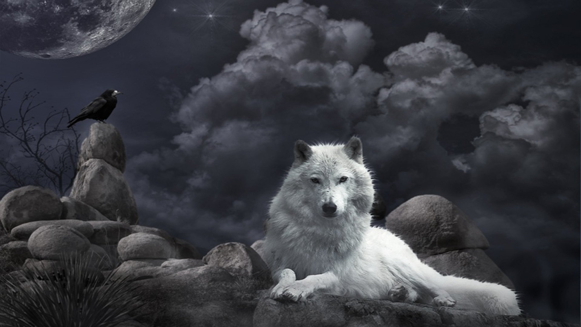 White Wolf Pictures Is Cool Wallpapers