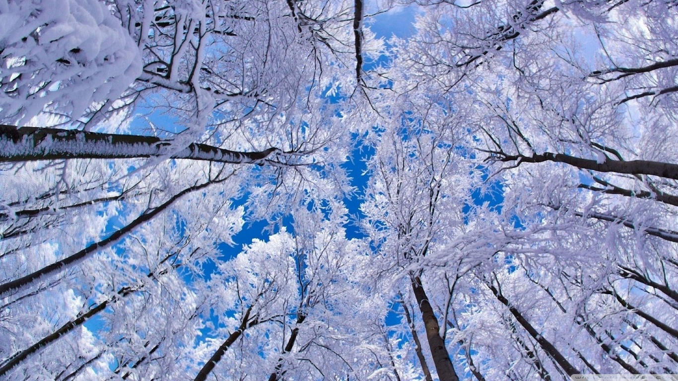 Winter Wallpapers Desktop Is Cool Wallpapers