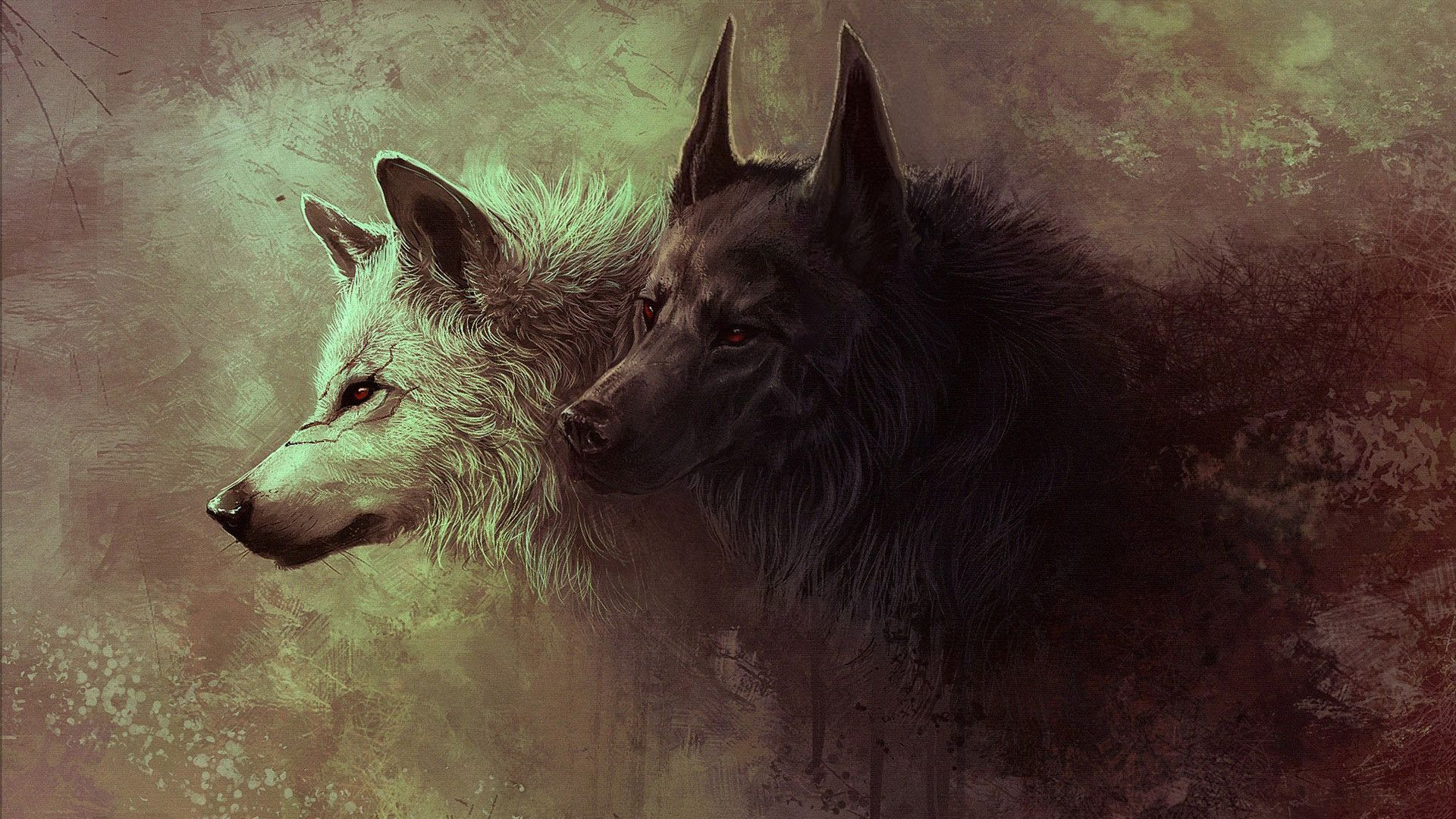Wolf Image Is Cool Wallpapers