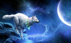Wolf Wallpaper Widescreen Is Cool Wallpapers
