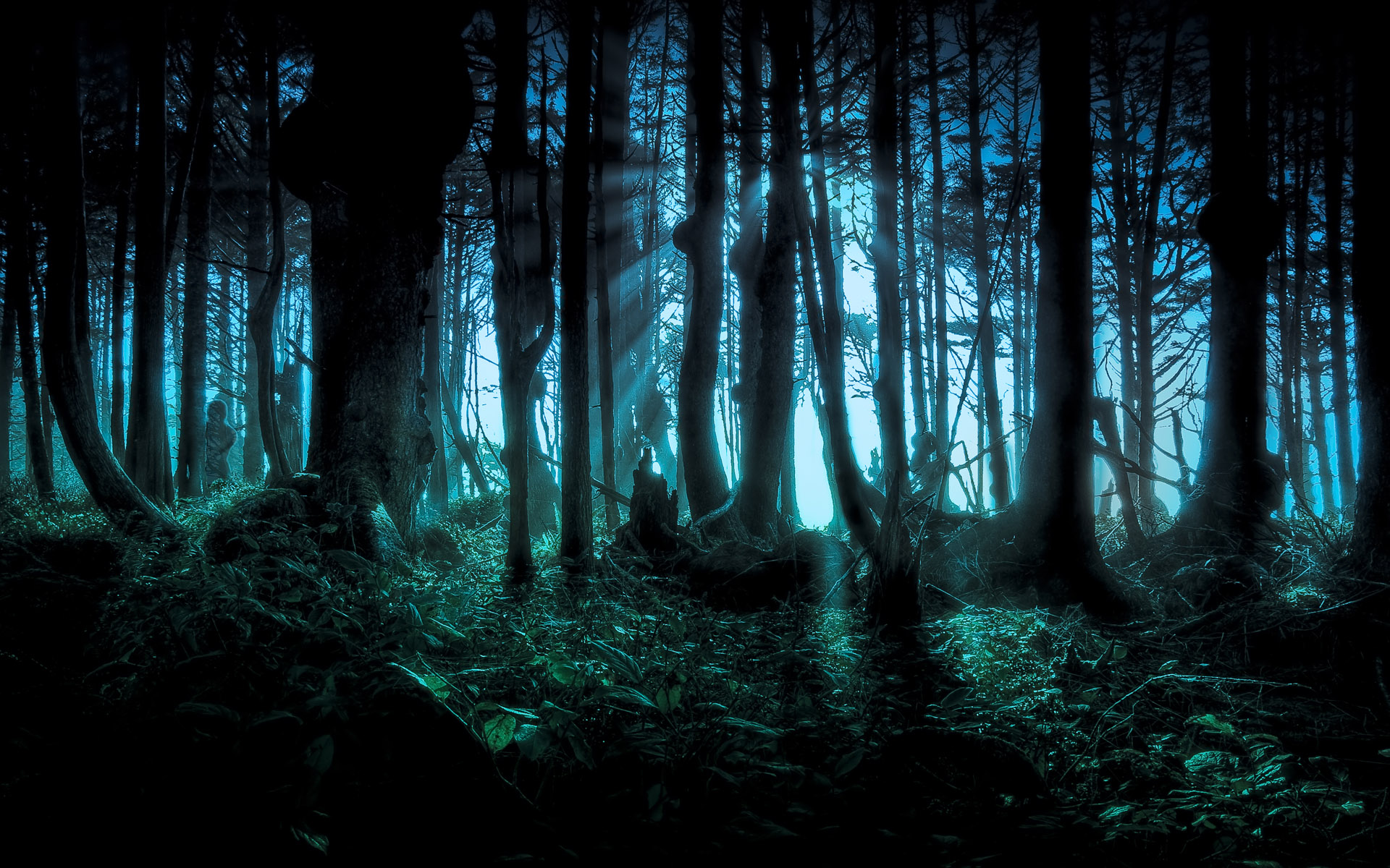 Dark Forest S Wallpapers Wide Is Cool Wallpapers