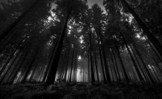 Dark Wood Wallpapers Images Is Cool Wallpapers