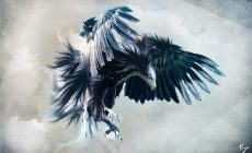 Eagle Wallpaper Desktop Background Is Cool Wallpapers
