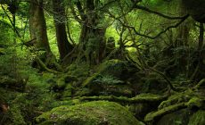 Forest Wallpapers High Resolution Is Cool Wallpapers