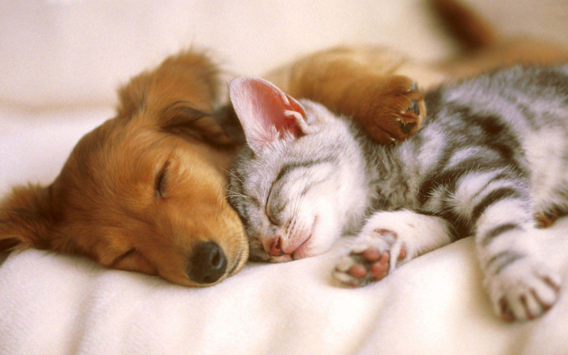 Kitten And Puppy Background Is Cool Wallpapers