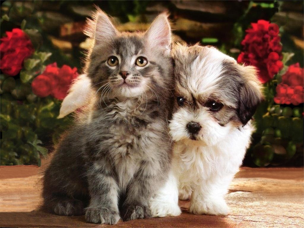 Kitten And Puppy Pictures Is Cool Wallpapers