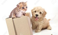 Kitten And Puppy Playing Wallpaper Widescreen Is Cool Wallpapers