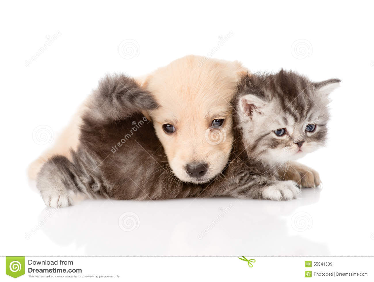 Kitten And Puppy Playing Wallpapers Widescreen Is Cool Wallpapers