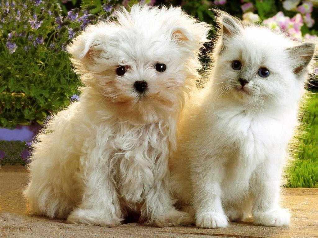 Kitten And Puppy Wallpaper Is Cool Wallpapers